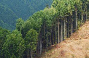 Deforestation for Planet Earth